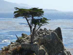 treeeonrock